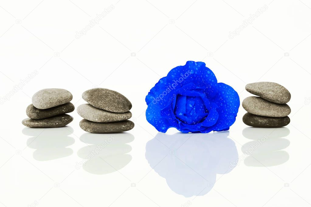 Blue rose with water drops and stones