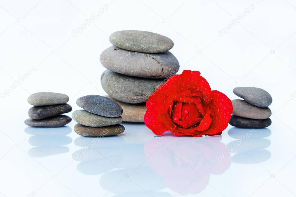 Red rose with water drops and stones. Harmony of Feng Shui