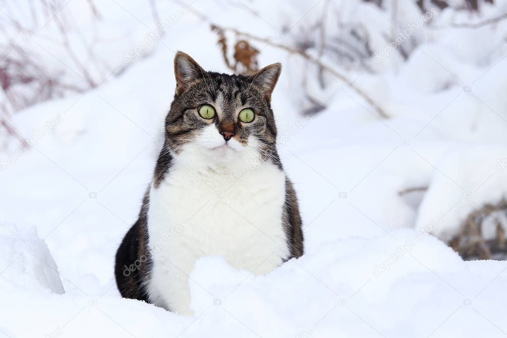 A pretty little brown-haired cat sits curiously in the snow