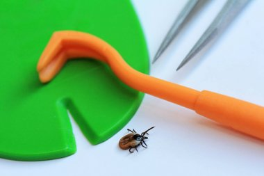 Correct and quick removal of a tick with a tick hook, tweezers or tick card