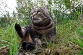 Malá tlustá kočka ji zvedne a vypadá legračně