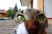 Širokoúhlý záběr malé kočky hledící přímo do kamery