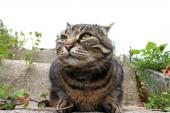 Široký úhel záběr ošklivě vypadající tlusté kočky