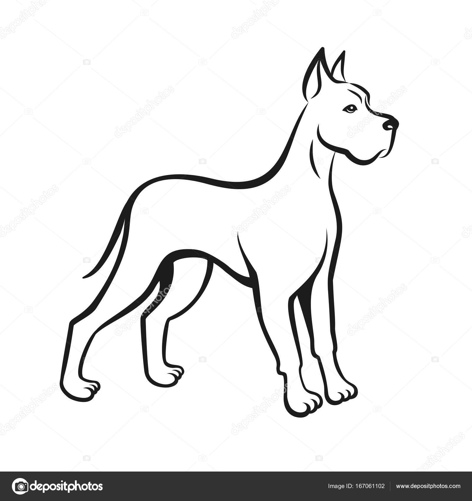 Line Drawing Of A Dog : Dog line drawing great dane can be used as pet shop logo