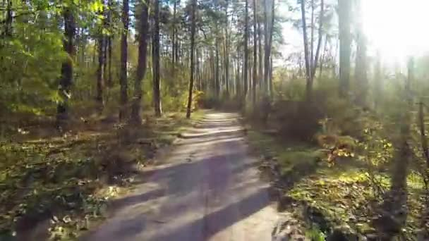 Drone flies through the autumn forest