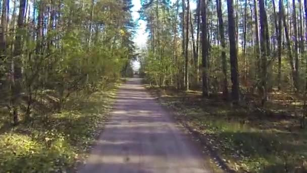 Drone flies through the autumn forest