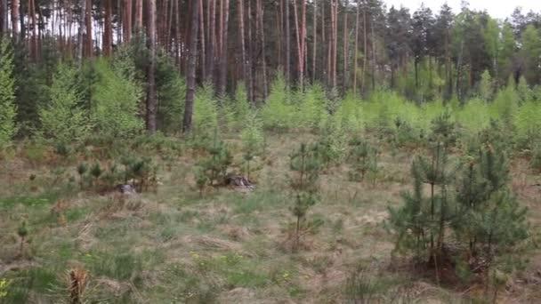 Vánoční stromeček grove v lese