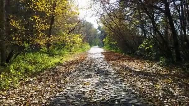 Cesta z cihel v žluté podzimní les