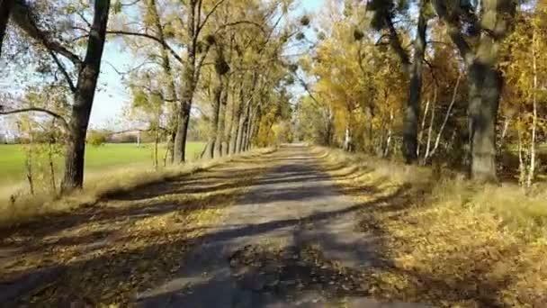 Na silnici v žluté podzimní les s uličkou a chlapce jezdit na koloběžce