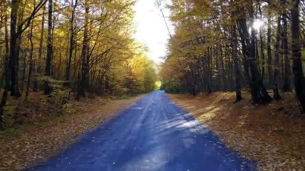 Na silnici v žluté podzimní les s uličkou