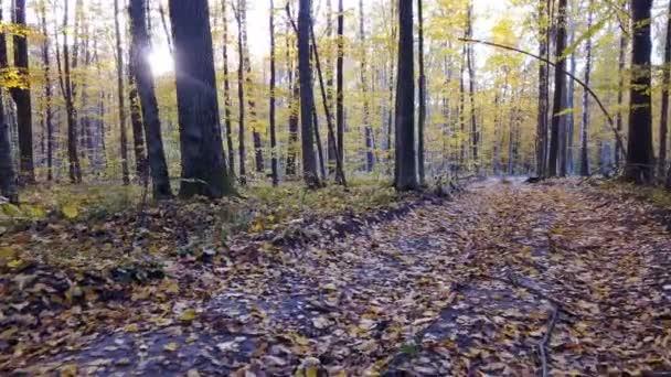 Close-Up Nézd a fák az erdő sárga lomb