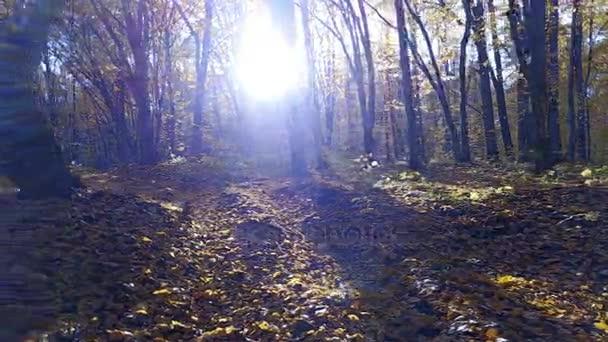 Datailní pohled na silnici v lese stromy které žluté listy