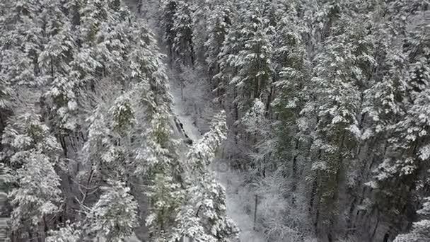 Letecký pohled na silnici s pobočkami na zasněžené borovice