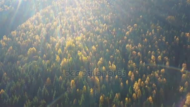 Letecký pohled na podzimní borový les s žluté a zelené stromy v horách