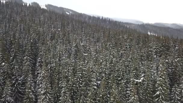 Letecký pohled na zasněžené borovice