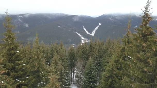 Paesaggio della montagna di inverno bella con gli abeti rossi in primo piano