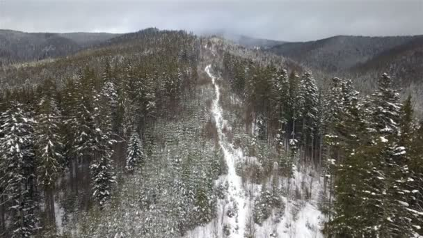 Mountain spruce forest with a of glade young fir-trees in winter.  Top view