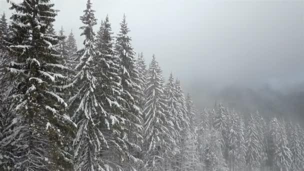 Letecký pohled na zasněžené borovice s mlhou