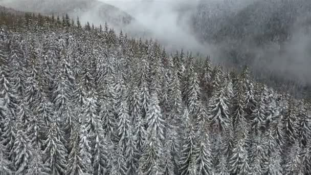 Winter mountain landscape. Carpathian. Aerial view on the snow-covered spruce forest