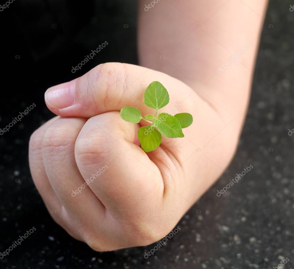 Hand Protecting A Green Small Young Plant