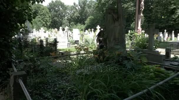 Gotické deprese dívka opírající se o plačící socha anděla hřbitově plné stromů a vegetace chvíle ticha