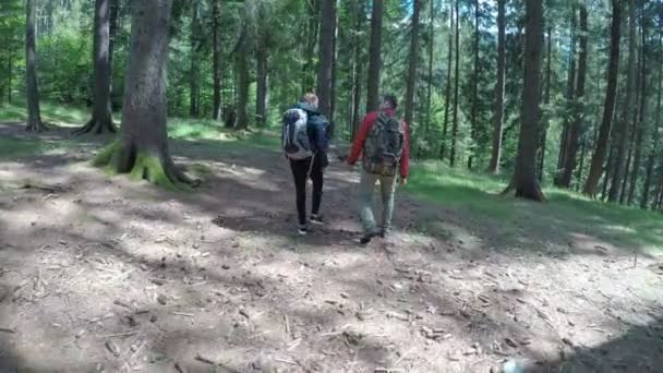 Group of ecologist people walking on a mountain trail trekking and enjoying green forest landscape