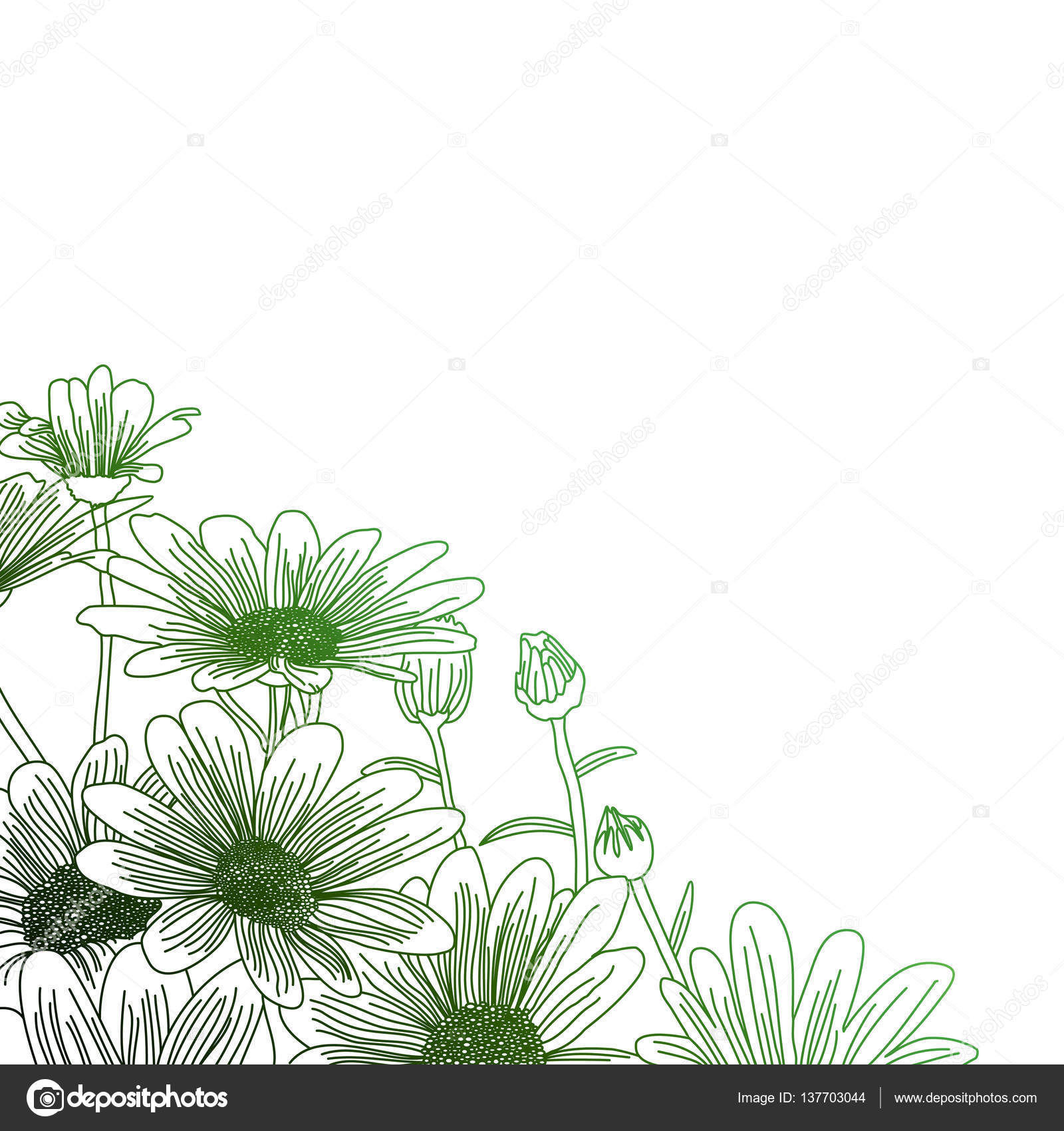 Daisy Flowers On A Green Background Outline Drawing Stock Vector