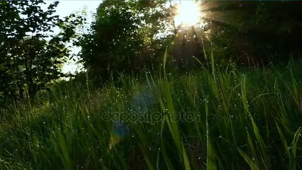 Zpomalený pohyb. Zelená Krtonožka rosou na jarní ráno