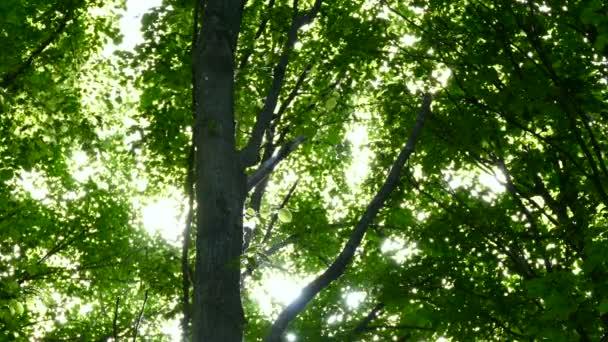 Částice prachu a kouře přes koruny stromů.