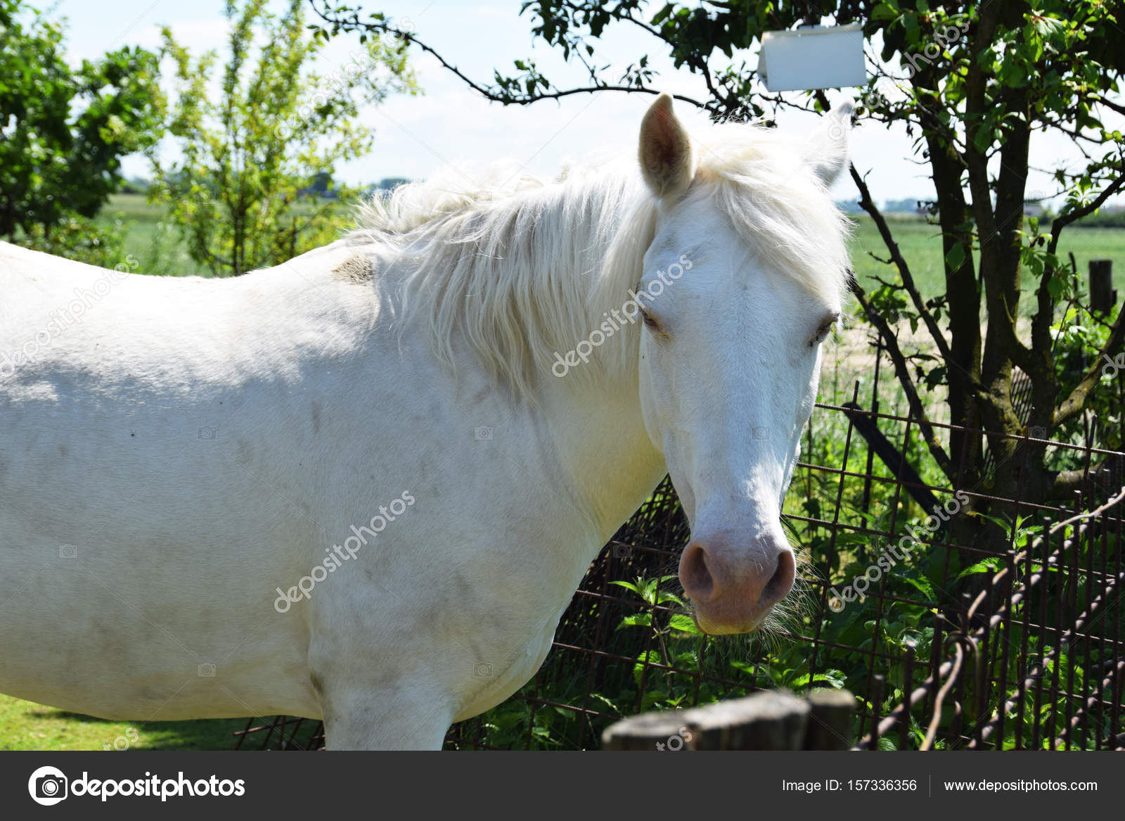 White Beautiful Horse In The Countryside Stock Photo C Kingapl 157336356