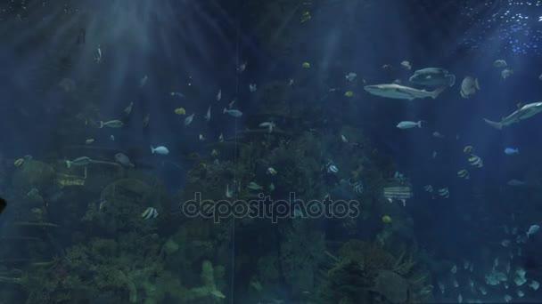 Sagome di bambini contro il grande acquario