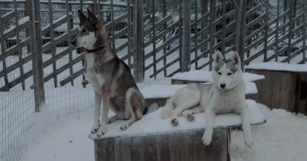 Two husky dogs on the kennel in cage