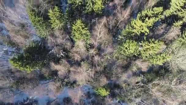 Smrk a holé břízy v zimě, smíšený les, letecký pohled