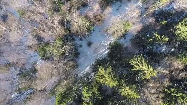 Letecká zimní scéna ze smíšeného lesa