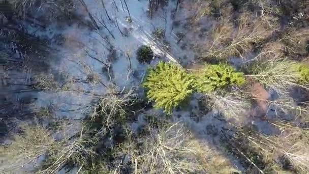 Letecký snímek zimní les