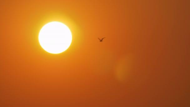 Zlaté večerní slunce a létání sea gull
