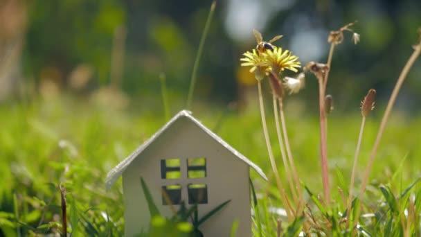 Eco home és élő. Metafora a kis ház, zöld fűben