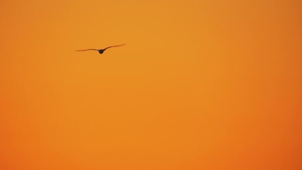 Several seagulls flying in sunset sky