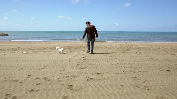 Happy man walking on beach playing with puppy maltese dog
