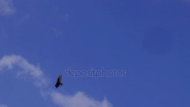 Egy magányos férfi kopasz sas szárnyal fenti egy fényes kék felhős ég