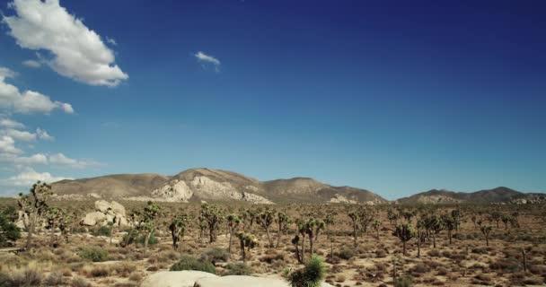 Šířku stromu Joshua národní Park s Yucca a Joshua Tree. Pouštní pohled, zahrada kaktusu cholla