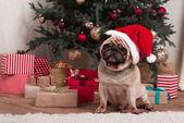 Vánoční Mops