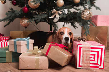 dog laying under christmas tree