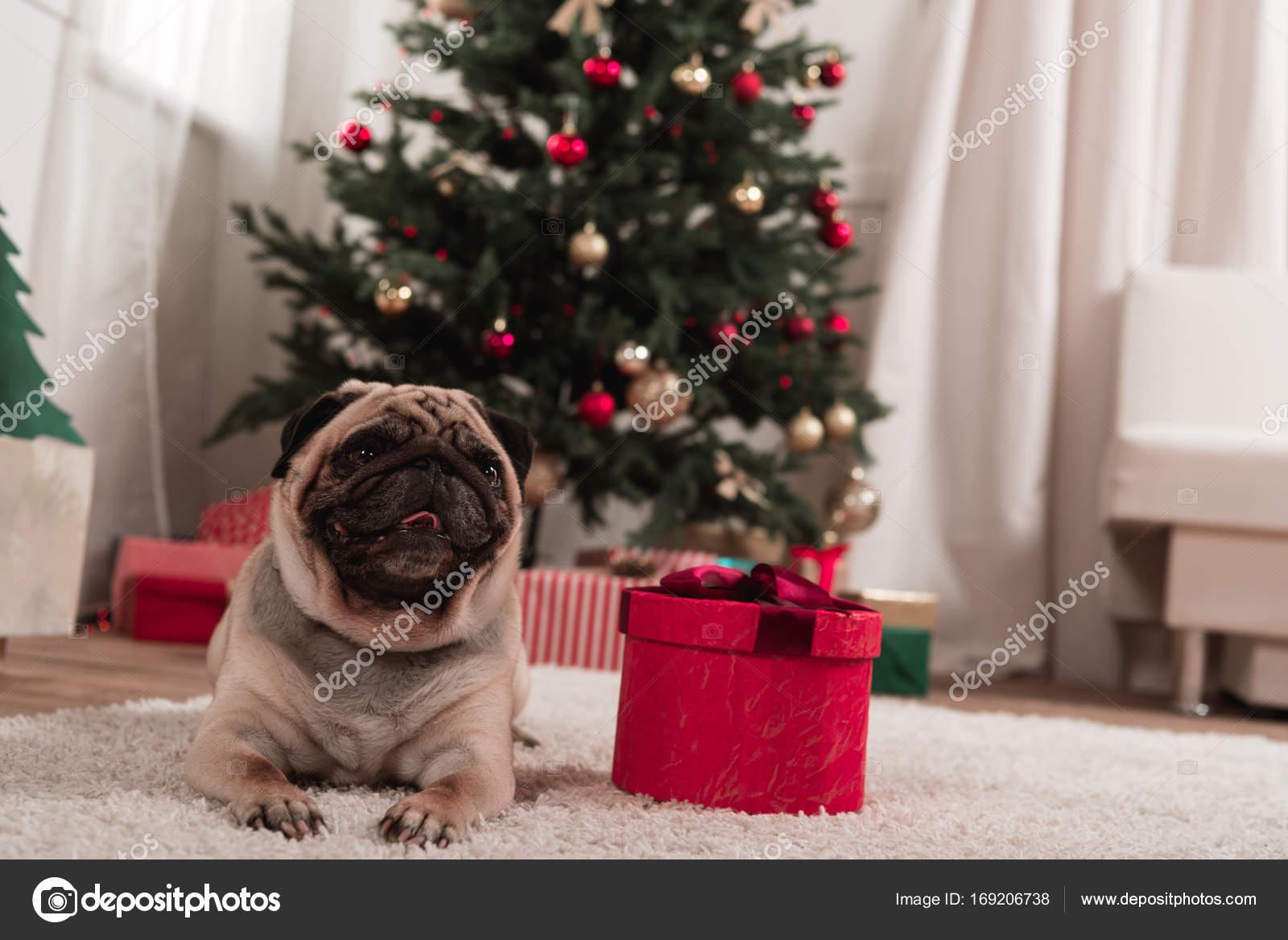 Mops mit Weihnachtsgeschenk — Stockfoto © AndrewLozovyi #169206738