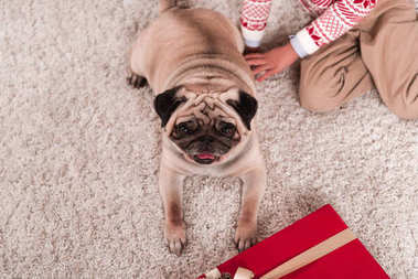 Top view of pug laying on carpet with gift box and little boy stock vector