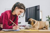 Fotografie Cute pug looking at girl working on illustrations on working table with computer