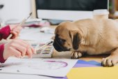 Mopsz szippantás női illustrator-kefe