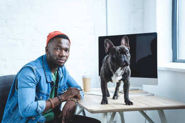 French bulldog standing on table with computer by young man freelancer