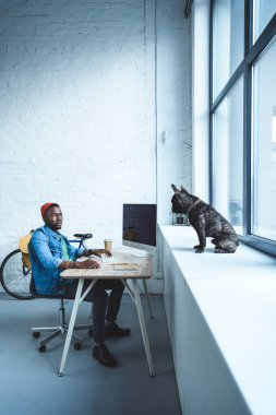 Handsome african american man working by computer while French bulldog sitting on windowsill