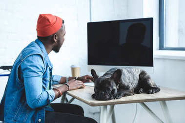 African american man working by computer while French bulldog lying on table